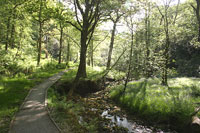 Grizedale
