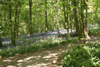 Spring Wood Whalley